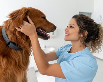 happy vet and dog