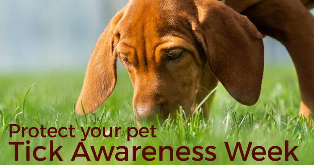 Protect your pet - tick awareness week